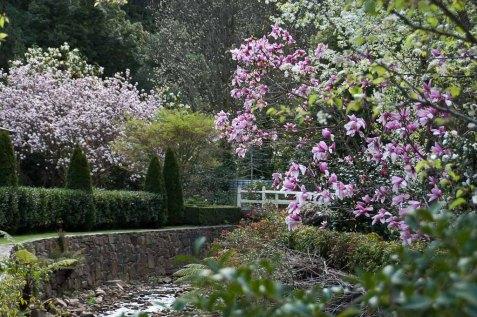 Gardens lining Stringers Creek