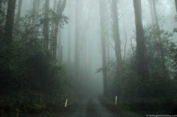 The road across Mt Donna Buang