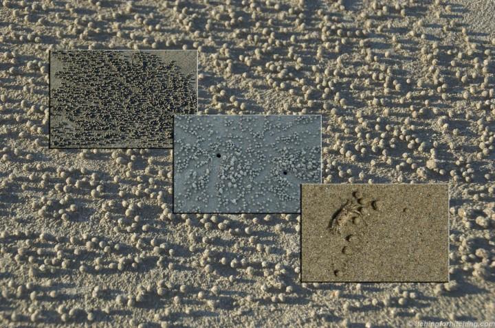 sand-crab-triptych-2